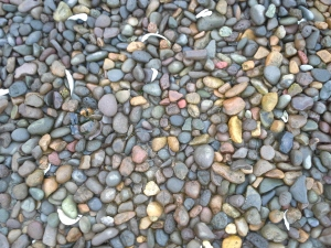 Beach rocks. This texture has filled my head for days.